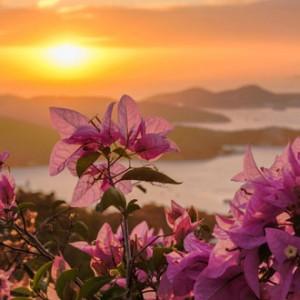 st-thomas-flowers-sunset-lg